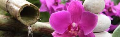 ambiance zen, jardin japonnais